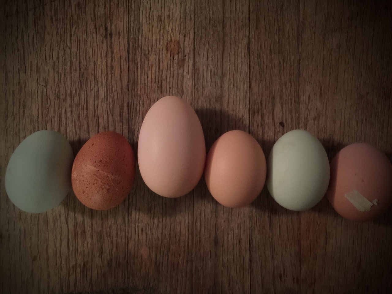 Beautiful, Fresh Eggs