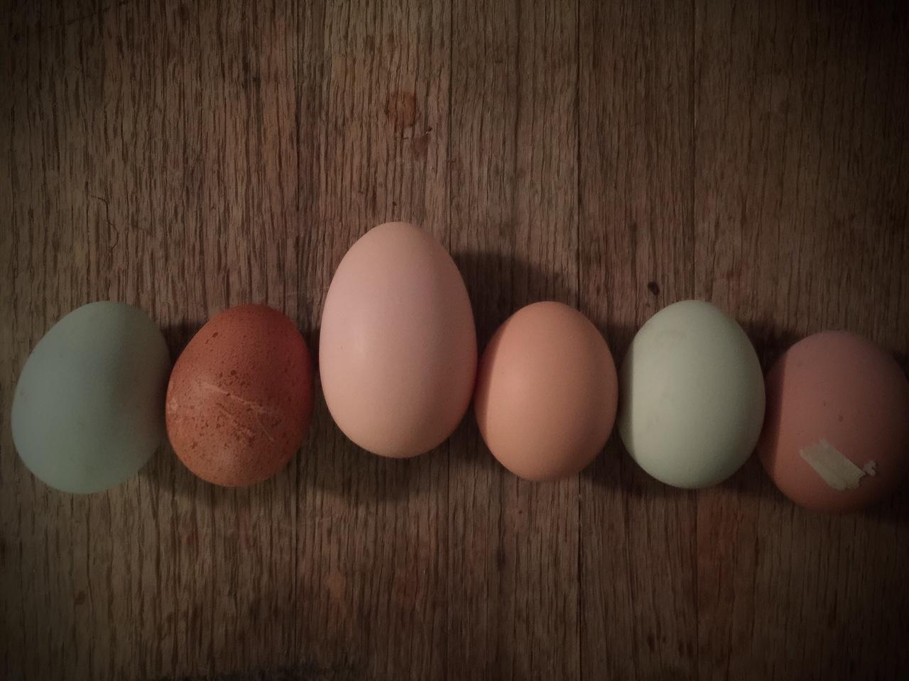Beautiful, Fresh Eggs