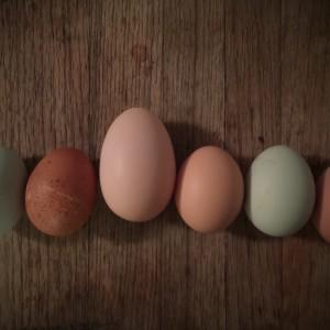 The Health Benefits of Farm-Fresh Eggs